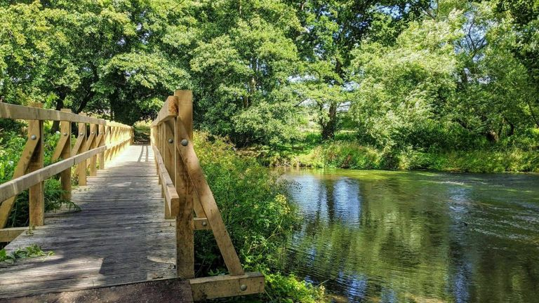 Tilford-Birds-and-Bridges-Circular-via-AllTrails